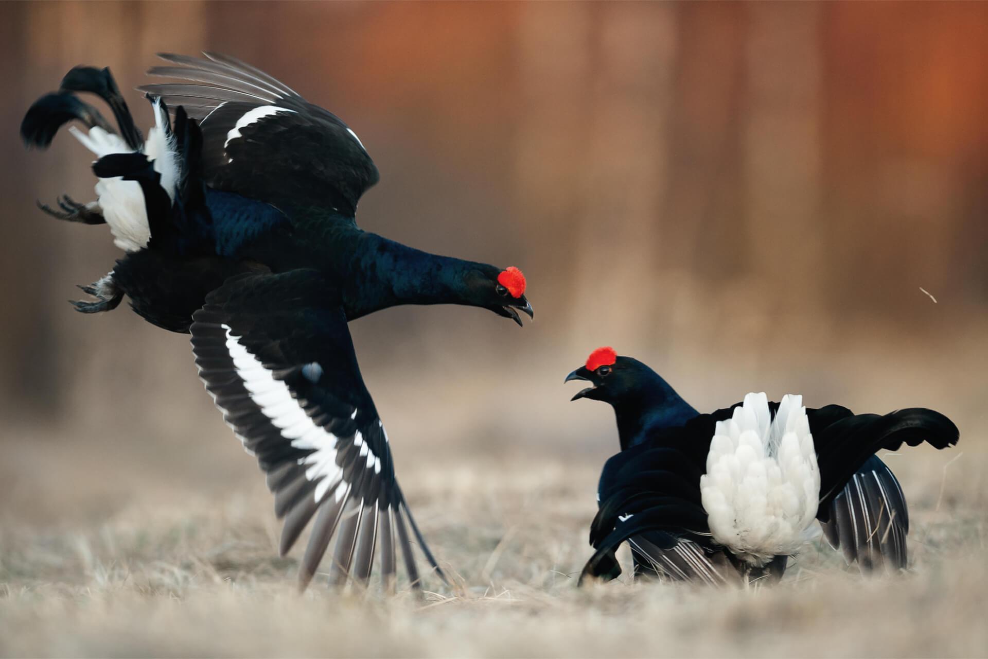 Censimento animali da caccia comprensorio alpino