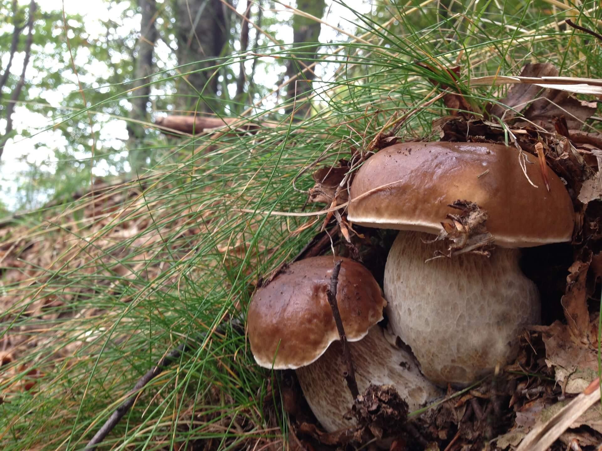 negozio specializzato nel reparto raccolta funghi in Val Brembana
